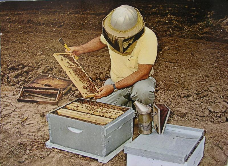Removing Bees From Hive